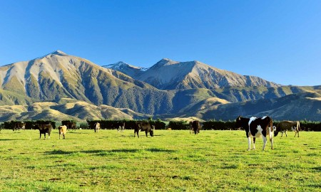 New Zealand Whey Protein